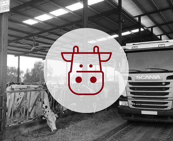 Servicios de alimentación animal